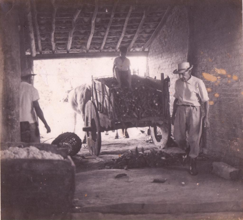 Chico (avô paterno) e Paulo Jorge - descarregando mandioca no engenho de farinha