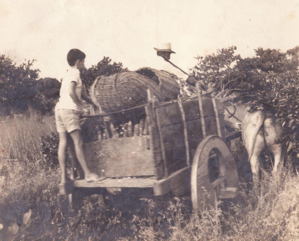 Chico (avô paterno) e Paulo Jorge - transportando mandioca para o engenho de farinha